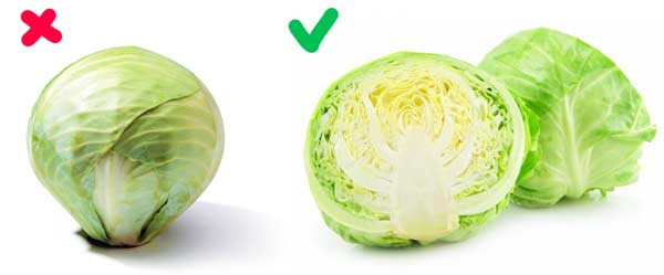 two types of cabbage